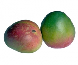 Les fruits : La Mangue